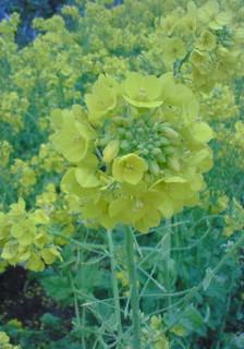 お花を見に。_d0091994_21515746.jpg
