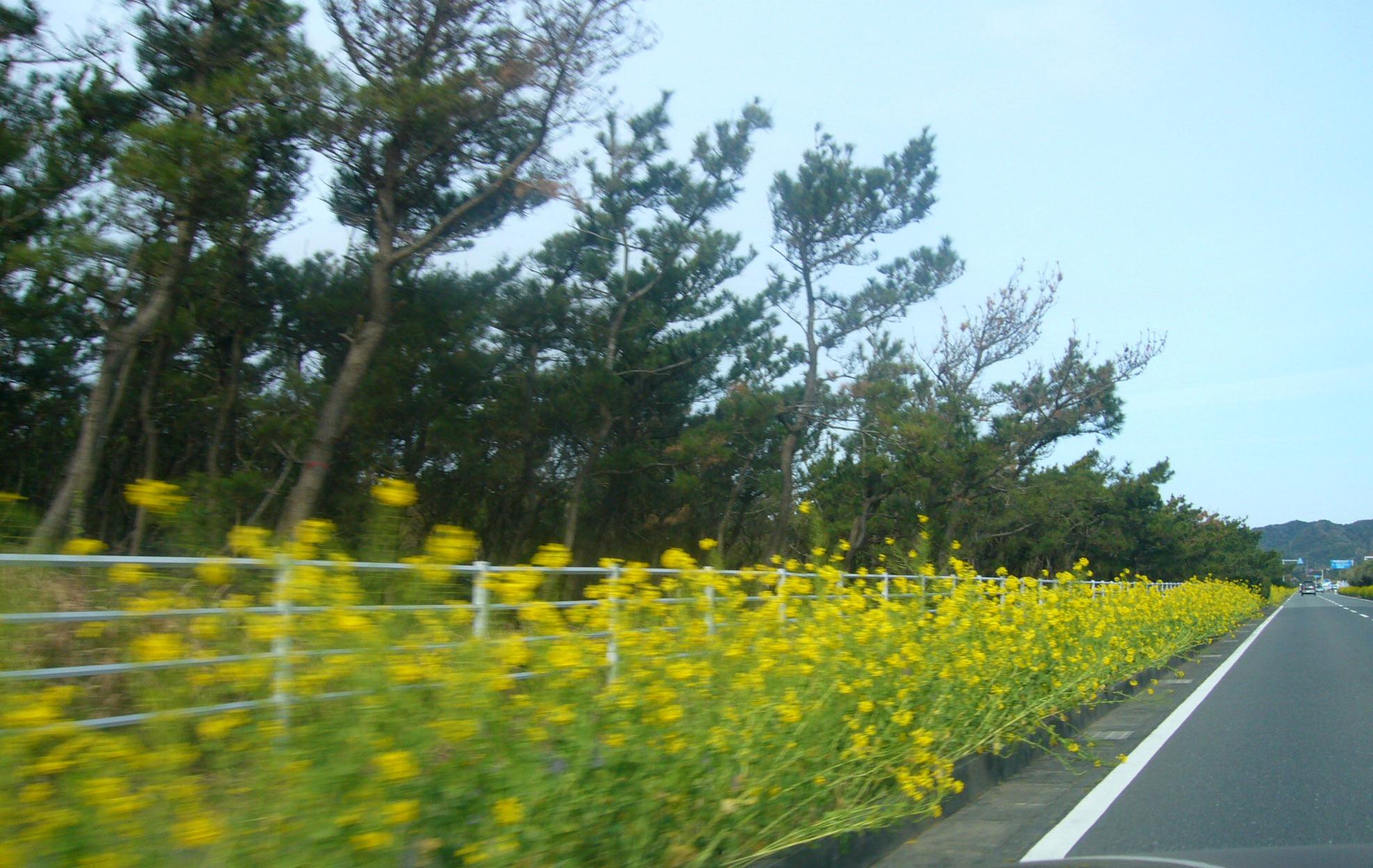 お花を見に。_d0091994_22153355.jpg