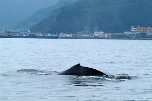 2/25 親子クジラ写真_a0010095_0265599.jpg