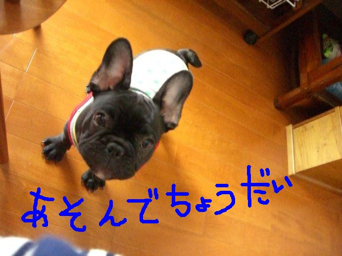 c0113109_22204846.jpg