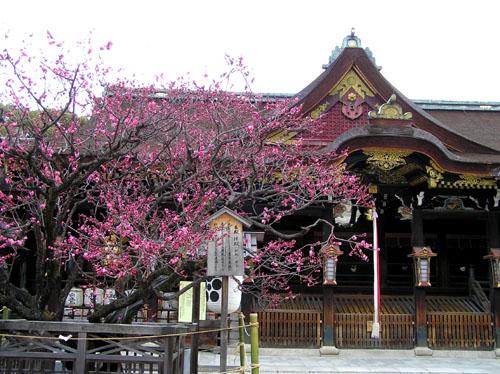 北野天満宮 梅花祭_e0048413_2341999.jpg
