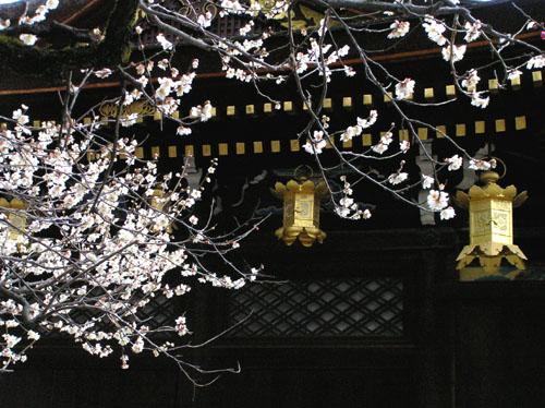 北野天満宮 梅花祭_e0048413_2345463.jpg