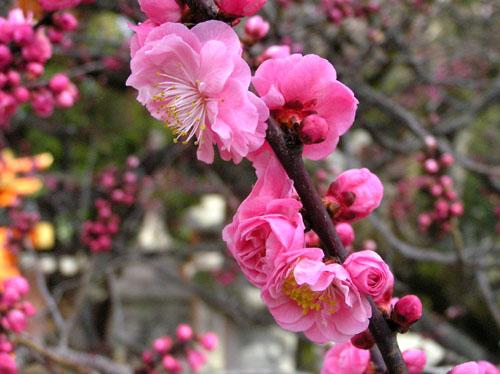 北野天満宮 梅花祭_e0048413_2364173.jpg