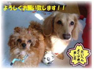 お知らせ☆☆☆_b0084929_14563274.jpg