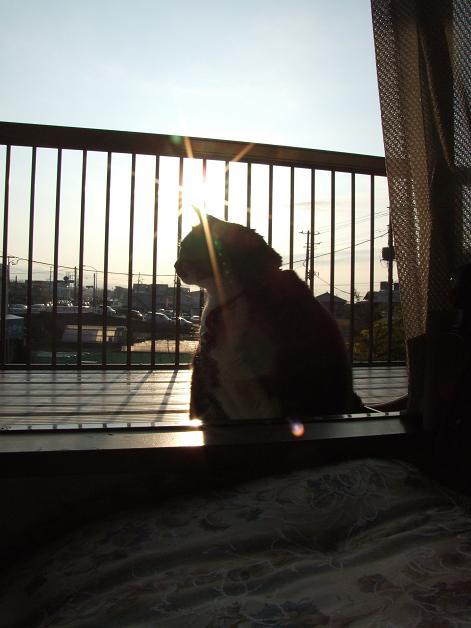 ベランダで朝日を浴びる_b0089338_0411876.jpg