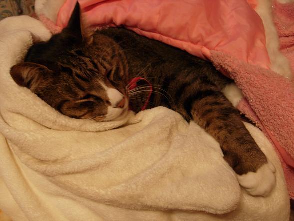 寝る猫 水彩画 _b0089338_1253127.jpg