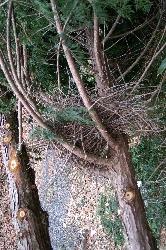 リスの巣? それともモモンガの巣?_f0114346_2205775.jpg