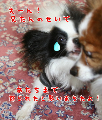 d0013149_020718.jpg