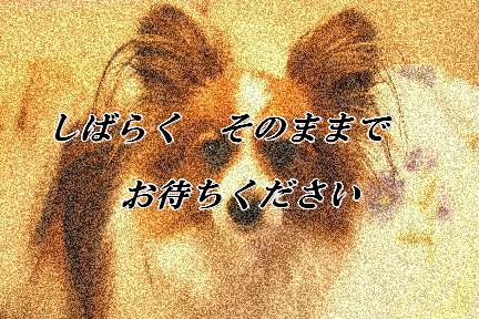 d0013149_0273488.jpg