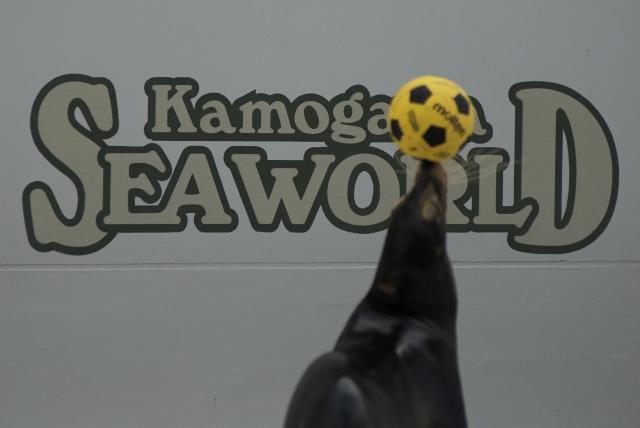 Kamo-sea_f0018464_614938.jpg