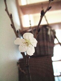 咲きました_d0091671_81722.jpg