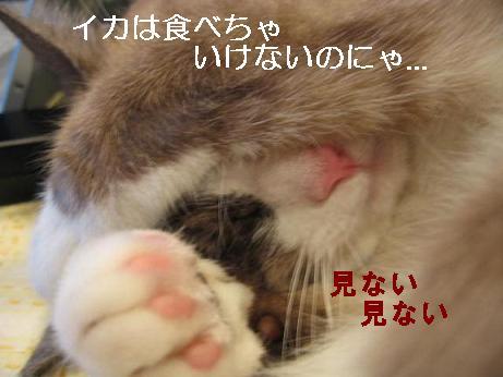 f0076702_16425973.jpg