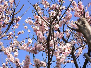 季節の花 Ⅱ_c0069048_23304592.jpg