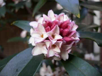 季節の花 Ⅱ_c0069048_2335132.jpg