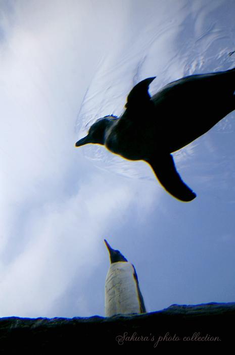 空飛ぶペンギン♪_c0052787_23401449.jpg