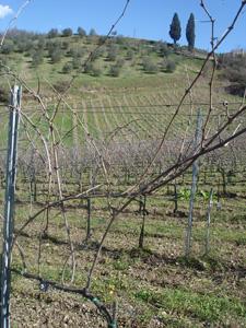 トスカーナは春です_f0106597_23305498.jpg