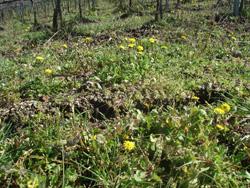 トスカーナは春です_f0106597_23425735.jpg