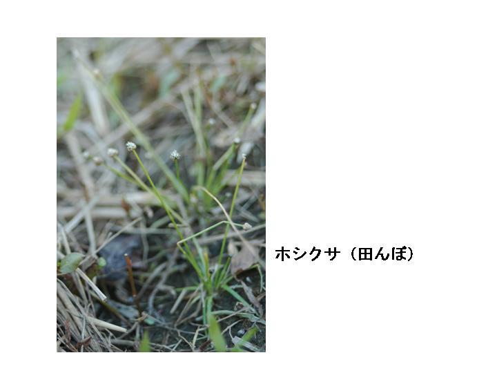 d0087325_15342232.jpg