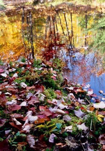 『アルゴンキン州立公園の紅葉』_d0112928_720071.jpg