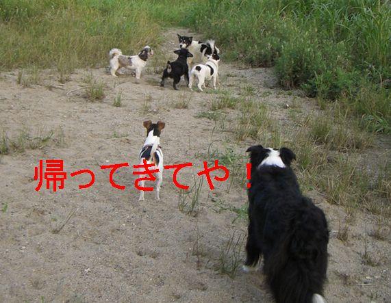 f0053952_16441799.jpg