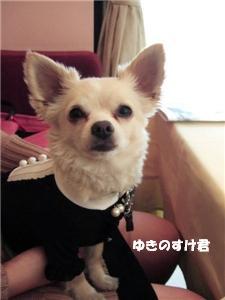シェ松尾オフ_d0006467_2253553.jpg