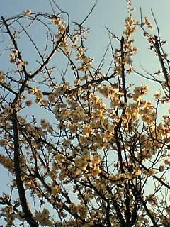 春?_d0074474_17562771.jpg
