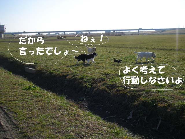 f0114893_85629.jpg
