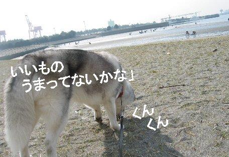 f0112407_2501114.jpg