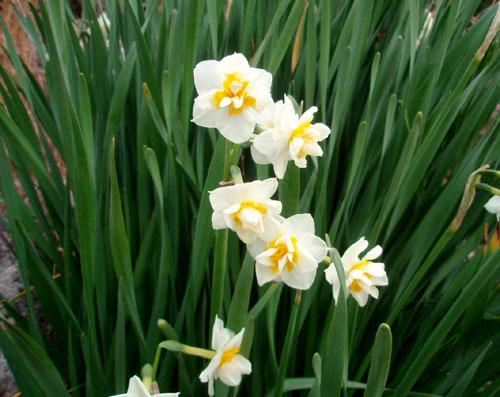 春のしるし_e0048413_21384932.jpg