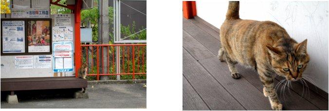 京都錦秋編(17):河合神社(06.11)_c0051620_662570.jpg