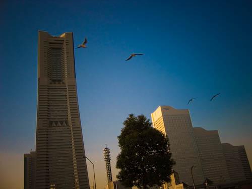 横浜でLunchした。_f0077521_22353520.jpg