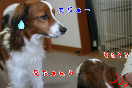 d0013149_011521.jpg