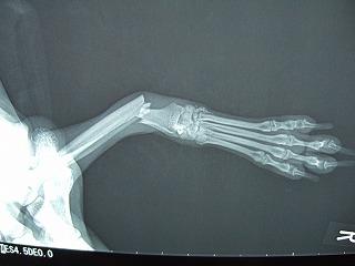 骨折の二匹_b0059154_11134387.jpg