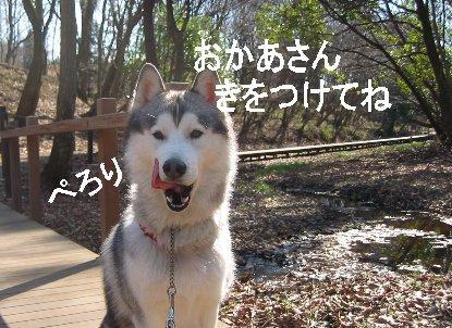 f0112407_0423517.jpg