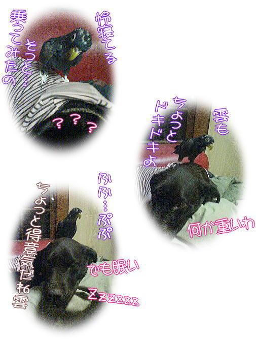 f0109418_102774.jpg