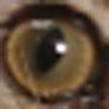 b0054042_1621688.jpg