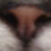 b0054042_1653788.jpg