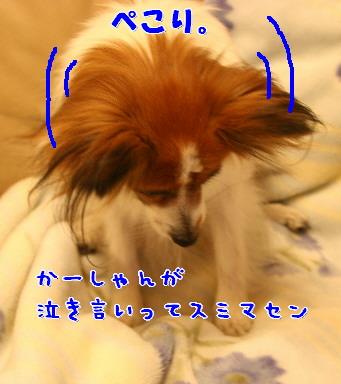 d0013149_22355593.jpg