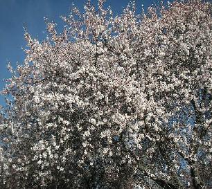 春_f0112655_2044549.jpg