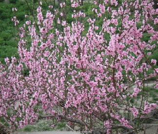 春_f0112655_2047421.jpg