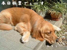 c0107886_2326863.jpg