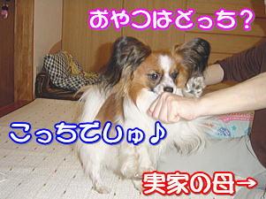 f0011845_3124371.jpg