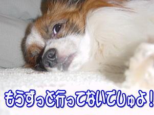 f0011845_316384.jpg