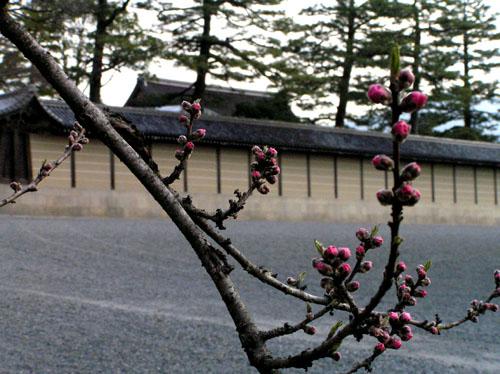 京都御苑_e0048413_1759574.jpg