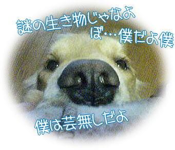 f0109418_2313327.jpg