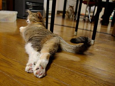 足を伸ばしくつろぐプーちゃん_a0028451_3575877.jpg