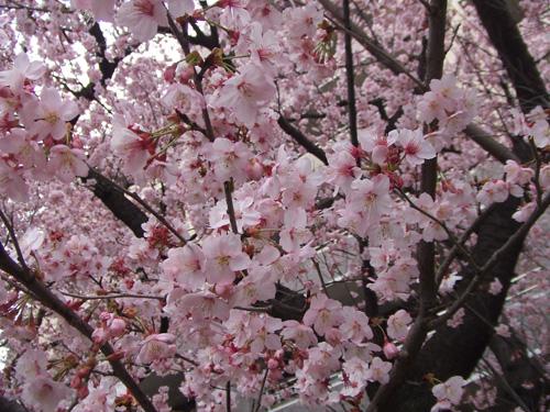 春うらら・・・?_f0094800_22484857.jpg
