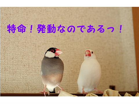 a0019545_22174476.jpg