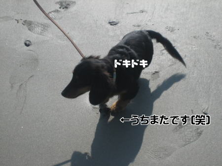 c0106958_16192636.jpg
