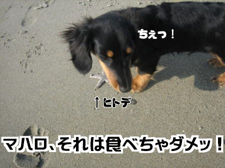 c0106958_16443944.jpg